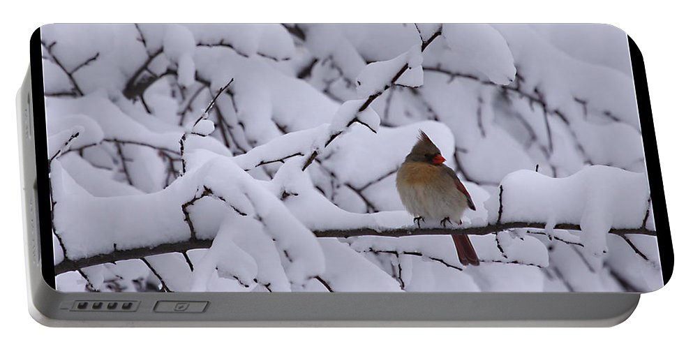 Female Cardinal Bird Wildlife Snow Season Winter Photograph Photographer Portable Battery Charger featuring the photograph Waiting For Mr. C by Shari Jardina