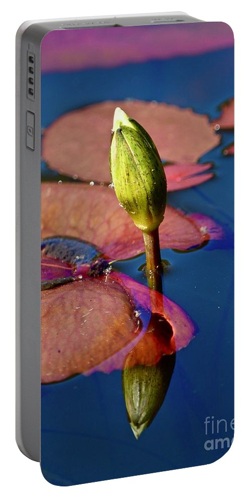 Lily Portable Battery Charger featuring the photograph Waiting For Spring by Andrea Spritzer
