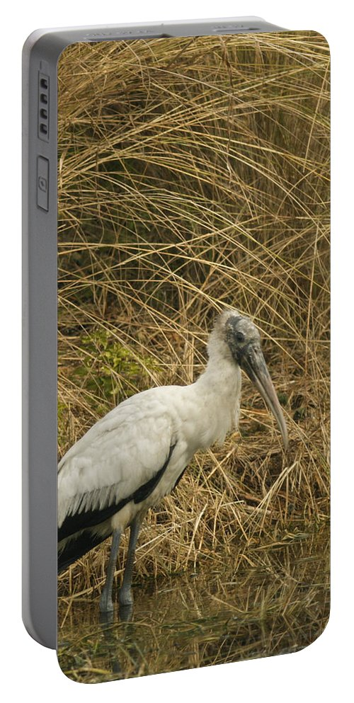 Bird Portable Battery Charger featuring the photograph Waiting by Phill Doherty