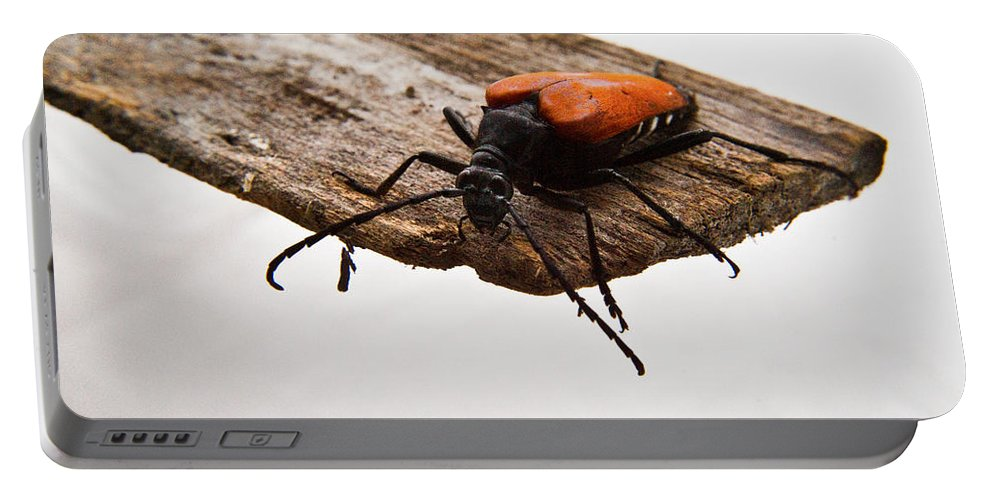 Cumberland Portable Battery Charger featuring the photograph Walking Beetle by Douglas Barnett