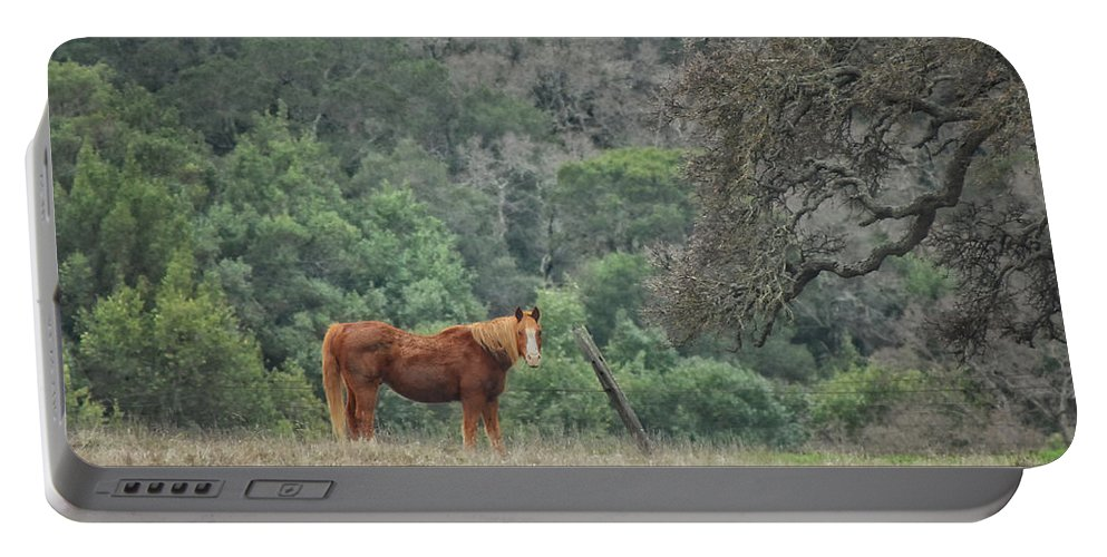 Horse Portable Battery Charger featuring the photograph Wanna Ride Little Lady by Donna Blackhall