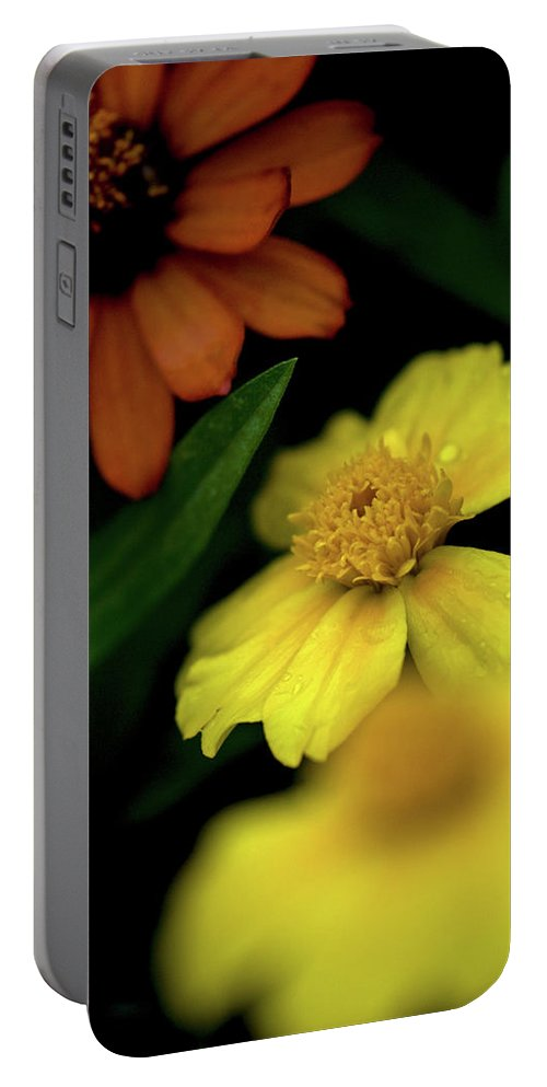 Daisy's Portable Battery Charger featuring the photograph Warm Combination by Paul Mangold