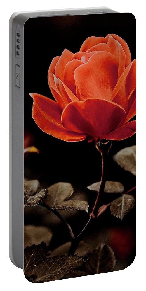 Nature Portable Battery Charger featuring the photograph Warm Sepia Rose by Zayne Diamond Photographic