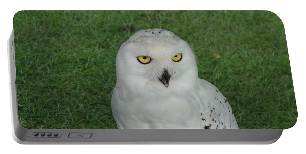 Owl Portable Battery Charger featuring the photograph Watching Owl by Susan Baker