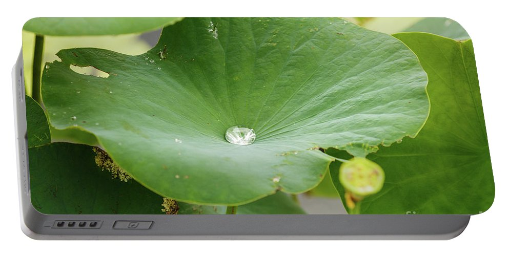 Water Portable Battery Charger featuring the photograph Water Droplet by Terri Morris
