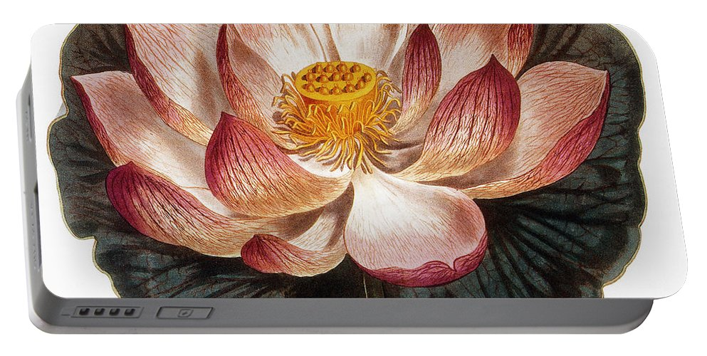 1806 Portable Battery Charger featuring the photograph Water Lily, 1806 by Granger