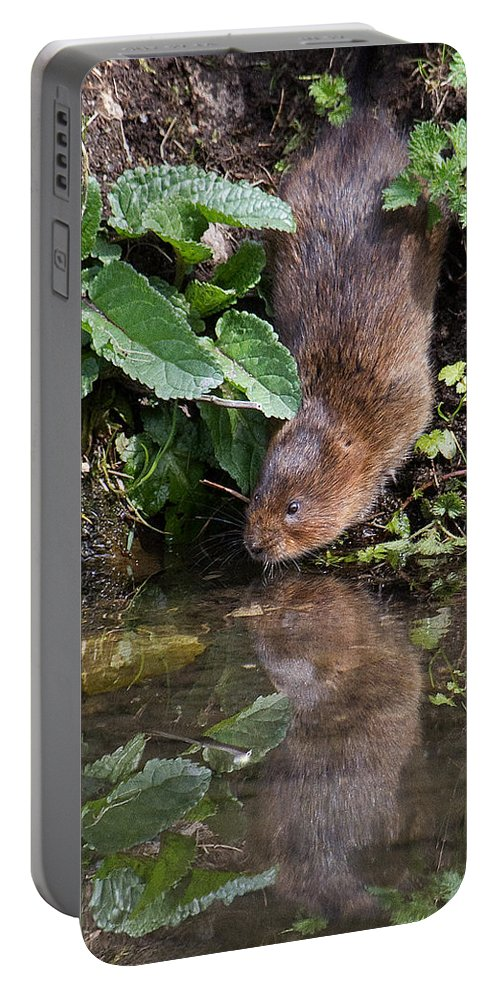 Water Vole Portable Battery Charger featuring the photograph Water Vole by Bob Kemp