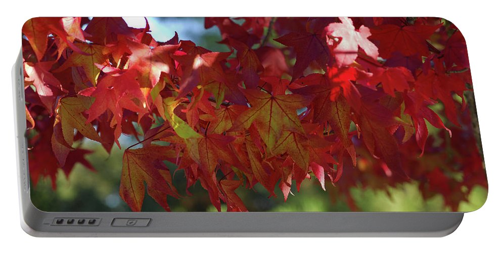 Red Leaves Portable Battery Charger featuring the photograph Wearing Red For Fall by Donna Blackhall