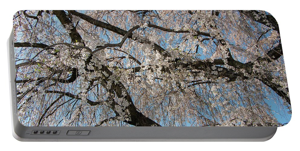 Cherry Portable Battery Charger featuring the photograph Weeping Cherry In Spring by Liza Eckardt