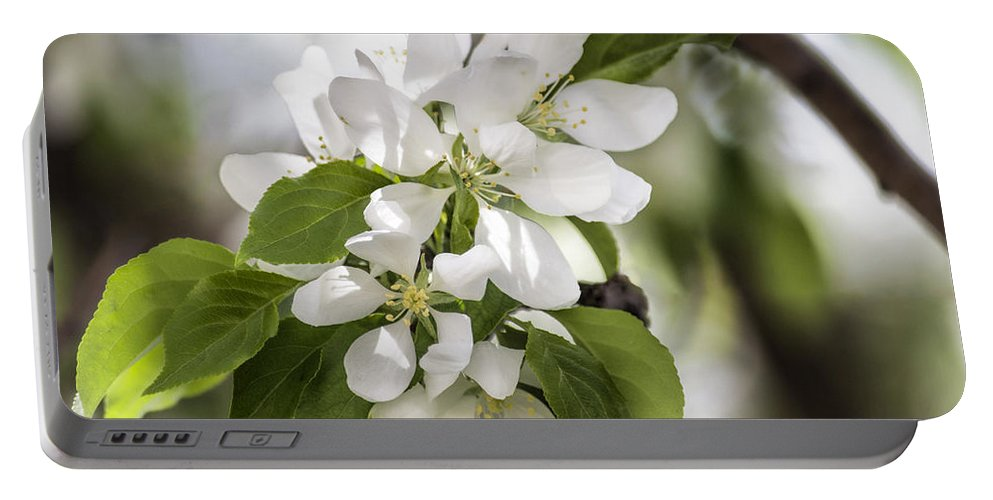 Flower Portable Battery Charger featuring the photograph Welcoming Spring by Becca Buecher