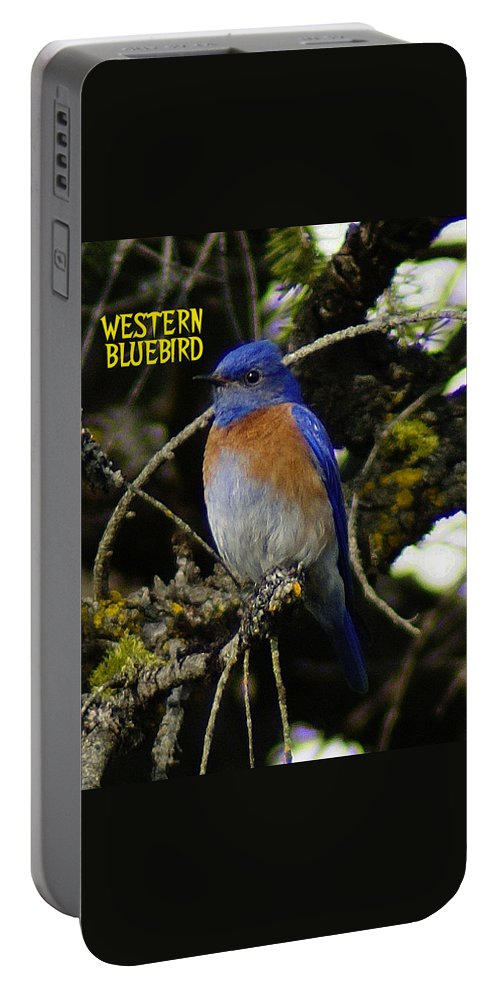 Birds Portable Battery Charger featuring the photograph Western Bluebird by Ben Upham III