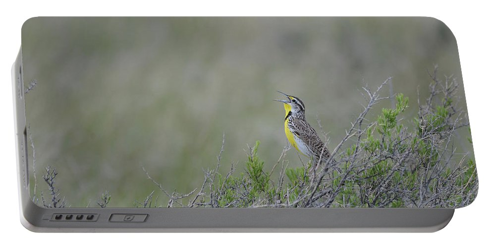Western Meadowlark Portable Battery Charger featuring the photograph Western Meadowlark Morning by Whispering Peaks Photography