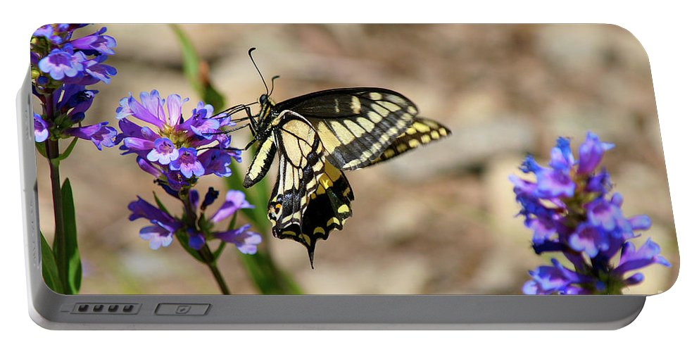 Western Swallowtail Butterfly Portable Battery Charger featuring the photograph Western Tiger Swallowtail by Bruce Block