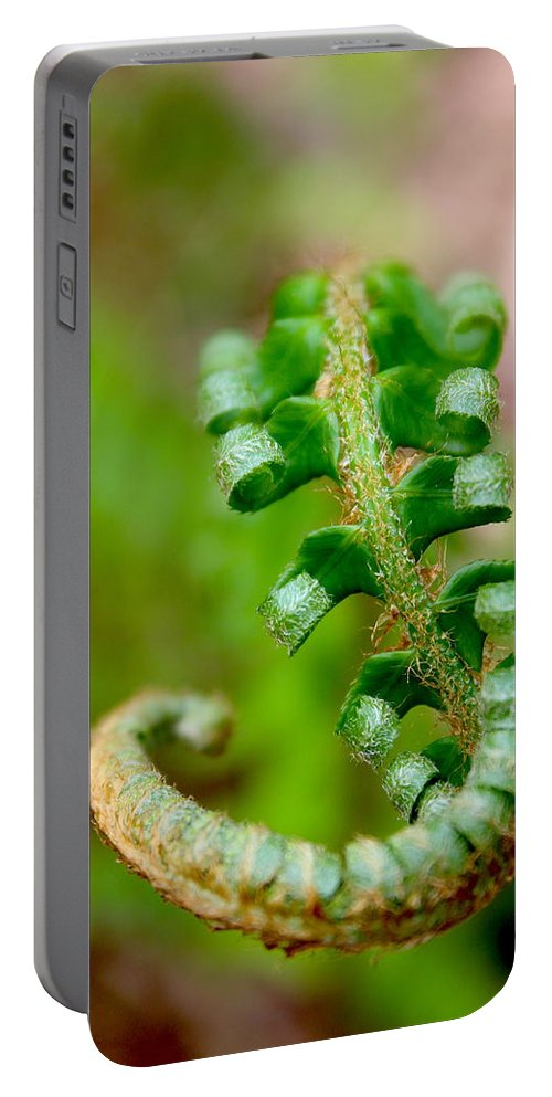 Travel Portable Battery Charger featuring the photograph Western Swordfern Three by Nicholas Miller