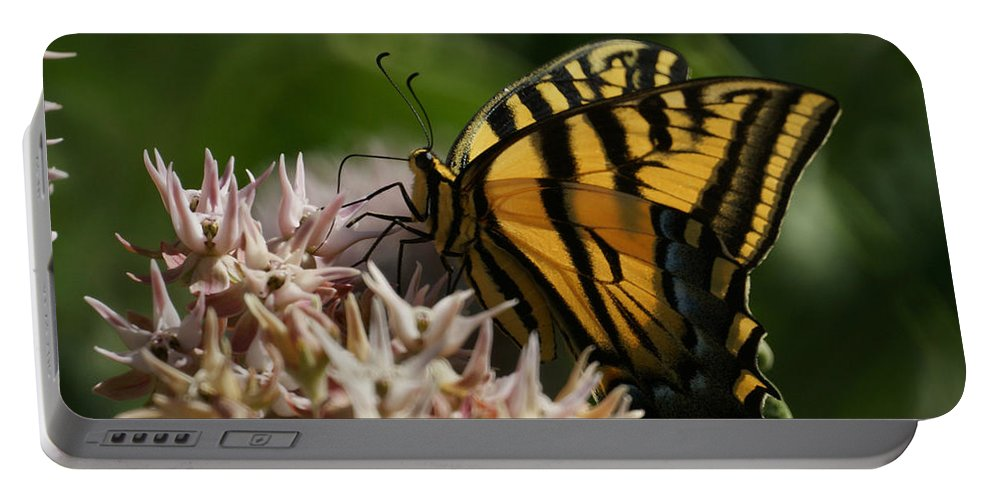 Bugs Portable Battery Charger featuring the photograph Western Tiger Swallowtail by Ernie Echols