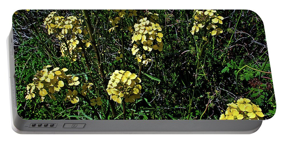 Western Wallflower Along Etiwanda Falls Trail In San Gabriel Mountains Portable Battery Charger featuring the photograph Western Wallflower Along Etiwanda Falls Trail In San Gabriel Mountains-california by Ruth Hager