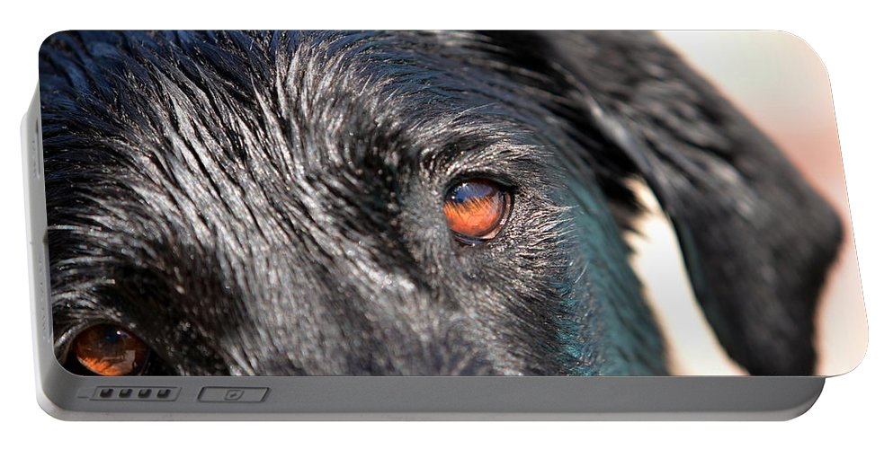 Black Lab Portable Battery Charger featuring the photograph Wet Black Lab by Vivian Krug Cotton
