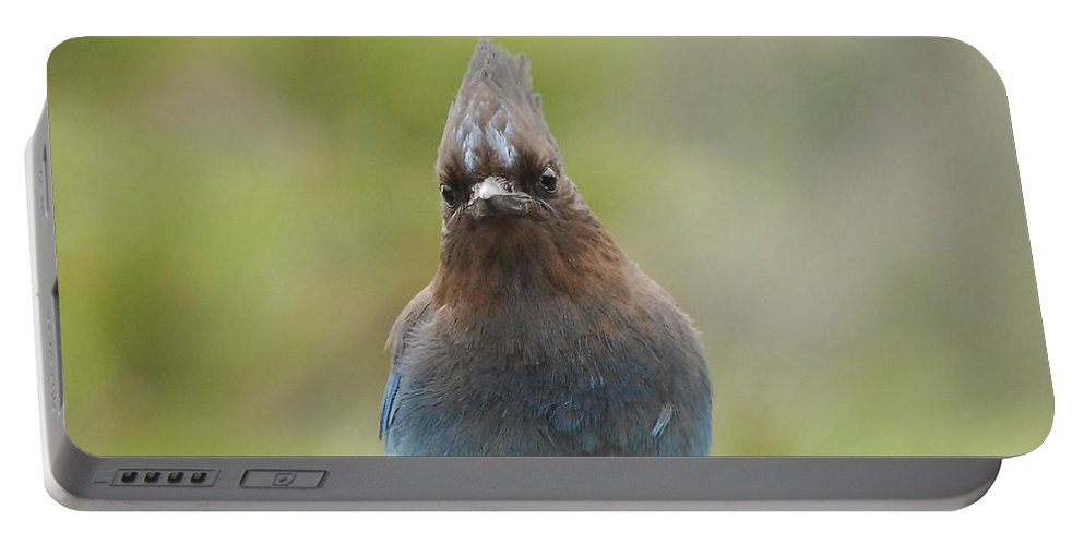 Bird Portable Battery Charger featuring the photograph Whadda You Lookin At by Donna Blackhall