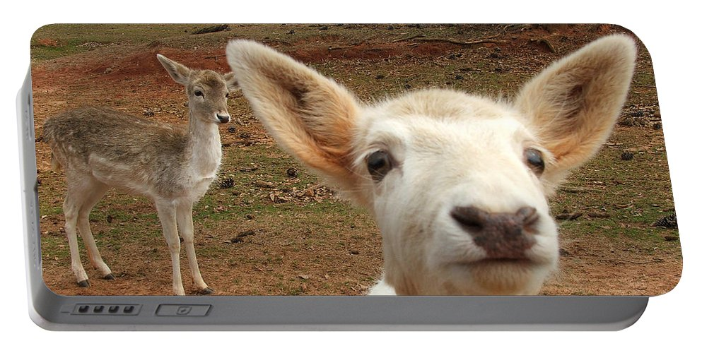 Deer Portable Battery Charger featuring the photograph What Is That by Robert Meanor