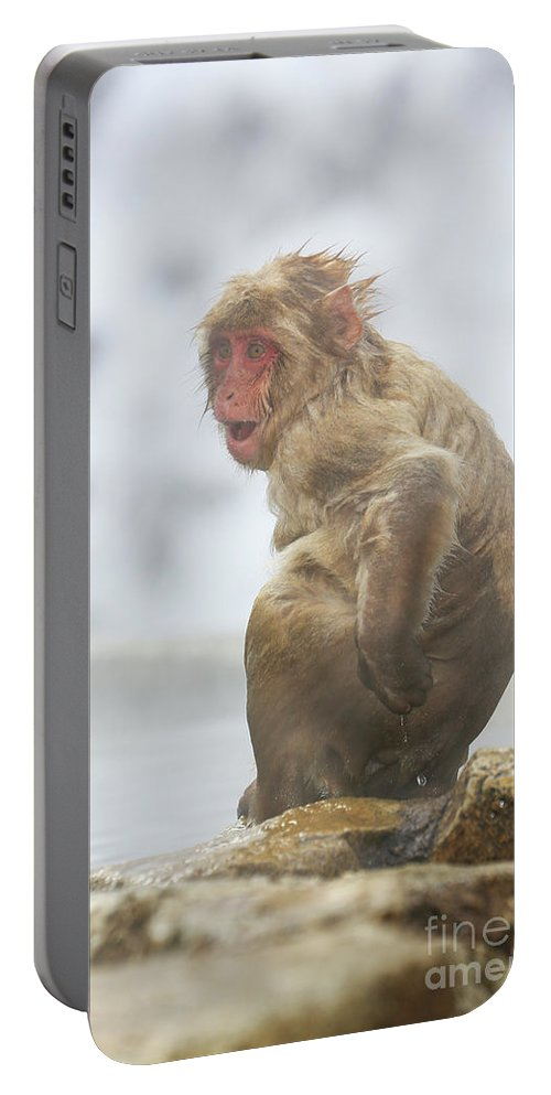 Snow Monkeys Portable Battery Charger featuring the photograph What by Leigh Lofgren