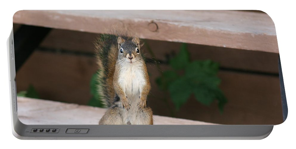 Squirrel Mother Nature Wild Animal Cute Dancing Portable Battery Charger featuring the photograph What You Lookin At by Andrea Lawrence