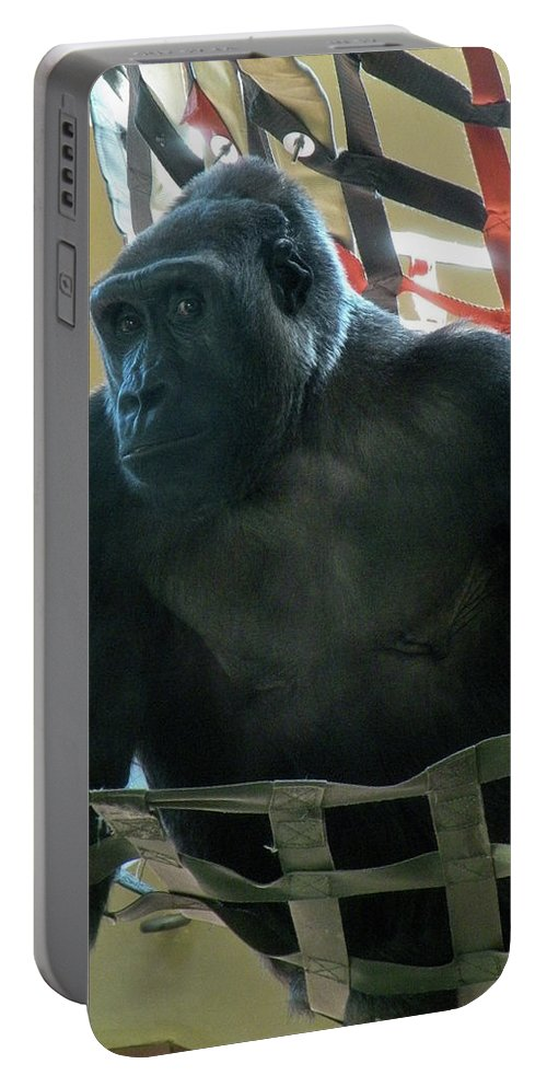 Monkey Portable Battery Charger featuring the photograph Whatcha Lookin' At by Trish Tritz