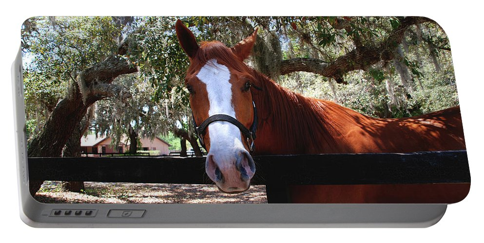 Horse Portable Battery Charger featuring the photograph Whats Your Name by Susanne Van Hulst