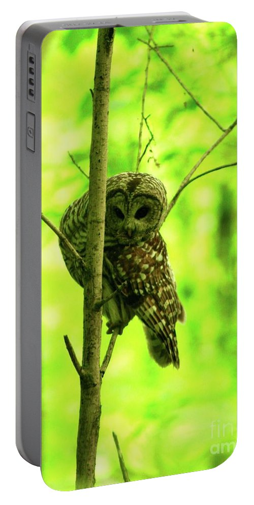 Barred Owl / Dolly Sods Wilderness Preserve Portable Battery Charger featuring the photograph Where Did He Go? by Gregory E Dean