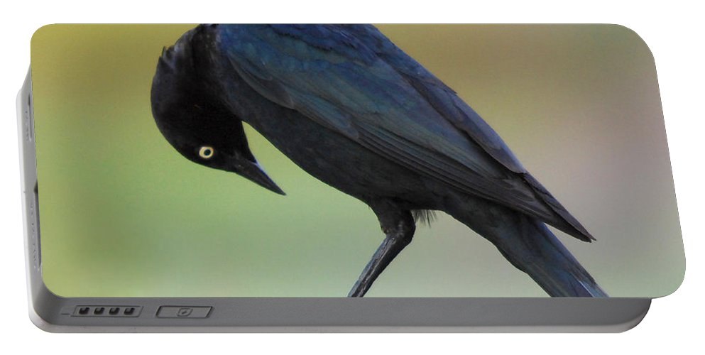 Black Bird Portable Battery Charger featuring the photograph Where Did It Go by Donna Blackhall