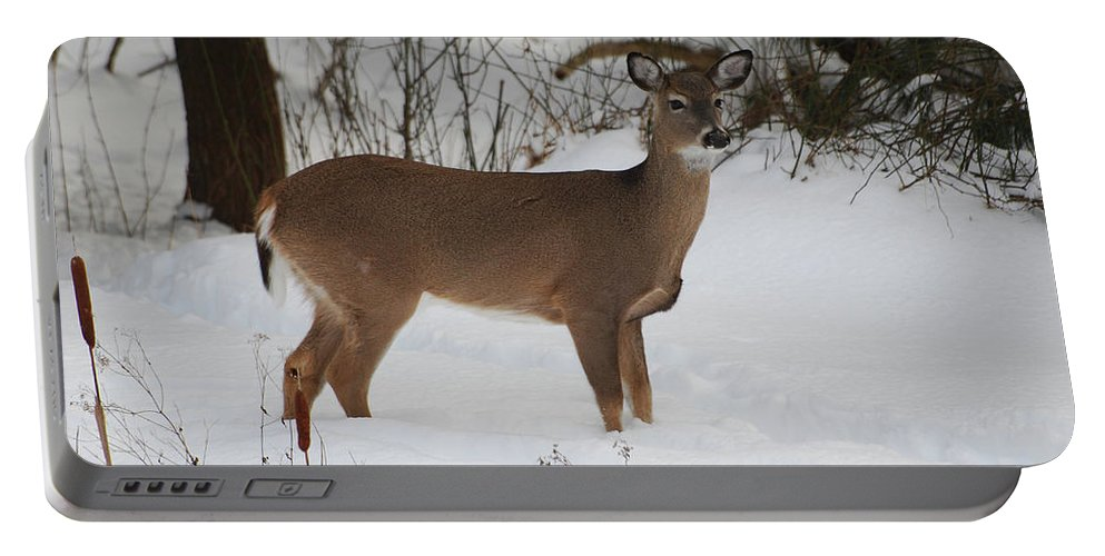 Deer Portable Battery Charger featuring the photograph Where Is Everybody by Lori Tambakis