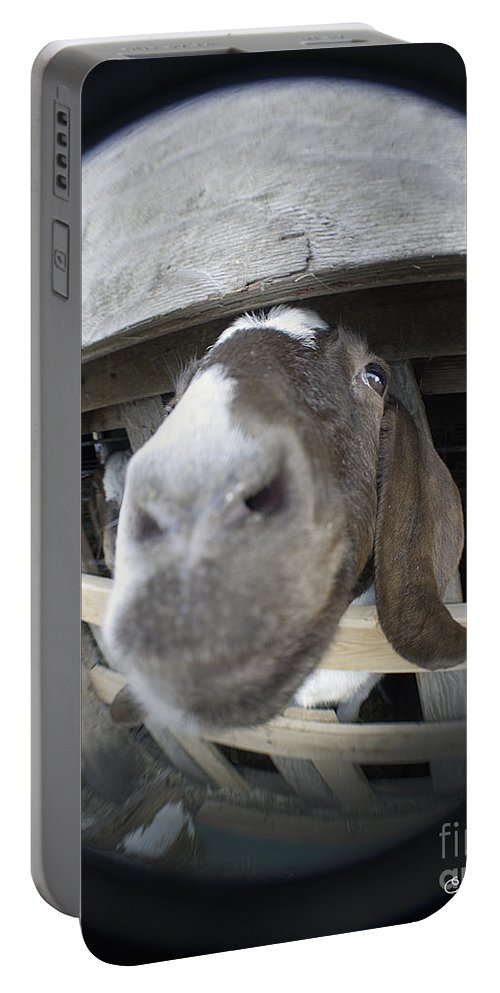 Art Portable Battery Charger featuring the photograph Where Is Eyore by Clayton Bruster