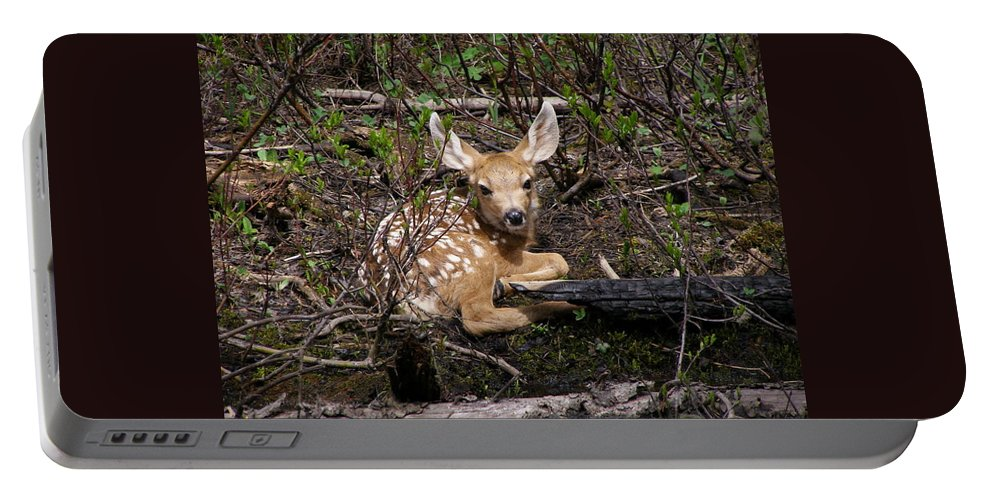Deer Portable Battery Charger featuring the photograph Where Mother Said Stay by DeeLon Merritt