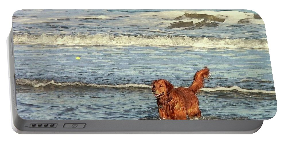 Pet Portable Battery Charger featuring the photograph Where's The Ball by Al Powell Photography USA