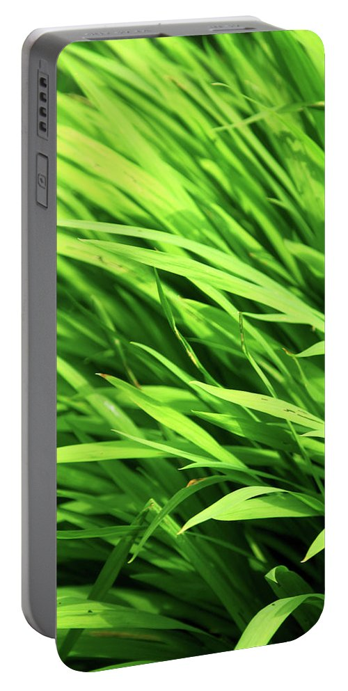 Btadford Portable Battery Charger featuring the photograph Whistle The Grass by Jez C Self