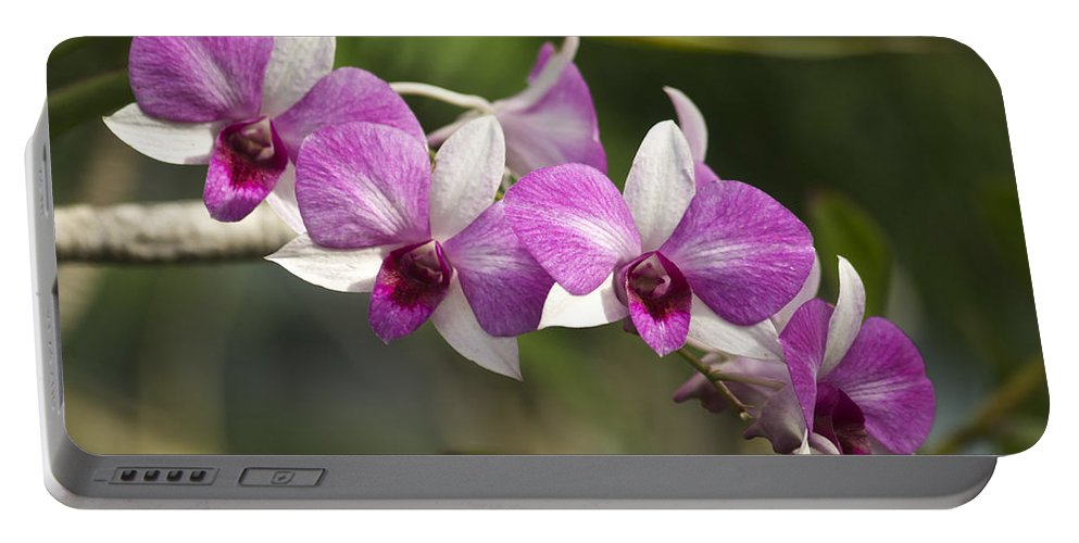 Flower Portable Battery Charger featuring the photograph White And Purple Orchids by Michael Peychich