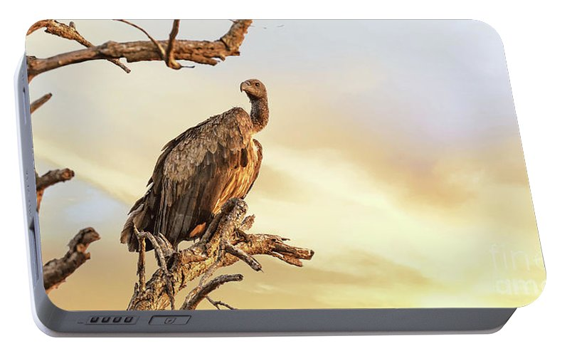 Vulture Portable Battery Charger featuring the photograph White-backed Vulture by Jane Rix