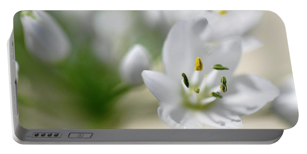 Lachish Portable Battery Charger featuring the photograph White Blossom 2 by Dubi Roman