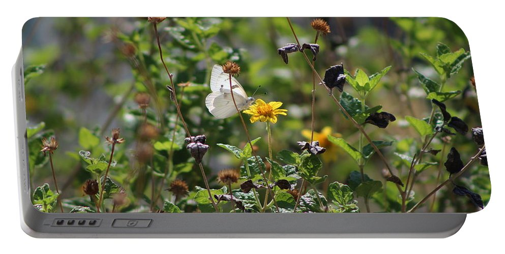 White Butterfly Portable Battery Charger featuring the photograph White Butterfly On Golden Daisy by Colleen Cornelius