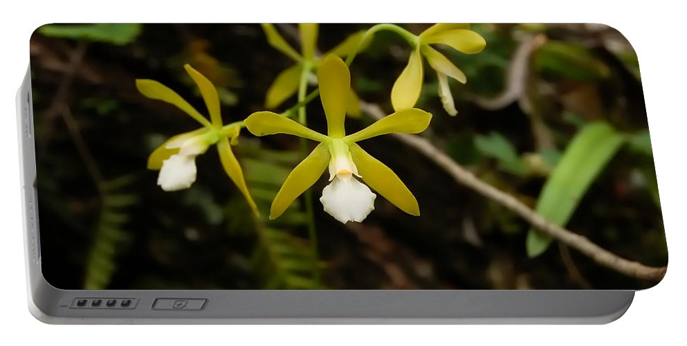 Orchid Portable Battery Charger featuring the photograph White Butterfly Orchid by Rich Leighton