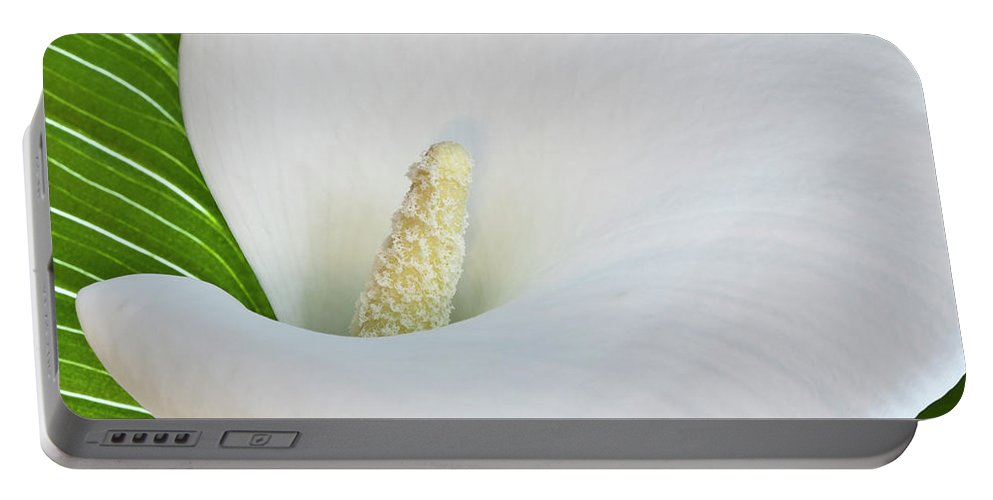 Calla Portable Battery Charger featuring the photograph White Calla by Heiko Koehrer-Wagner