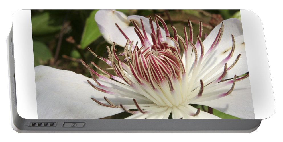 Clematis Portable Battery Charger featuring the photograph White Clematis Henryi by Margie Wildblood