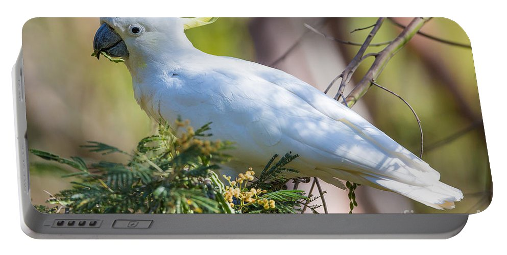 White Cockatoo Portable Battery Charger featuring the photograph White Cockatoo by B.G. Thomson