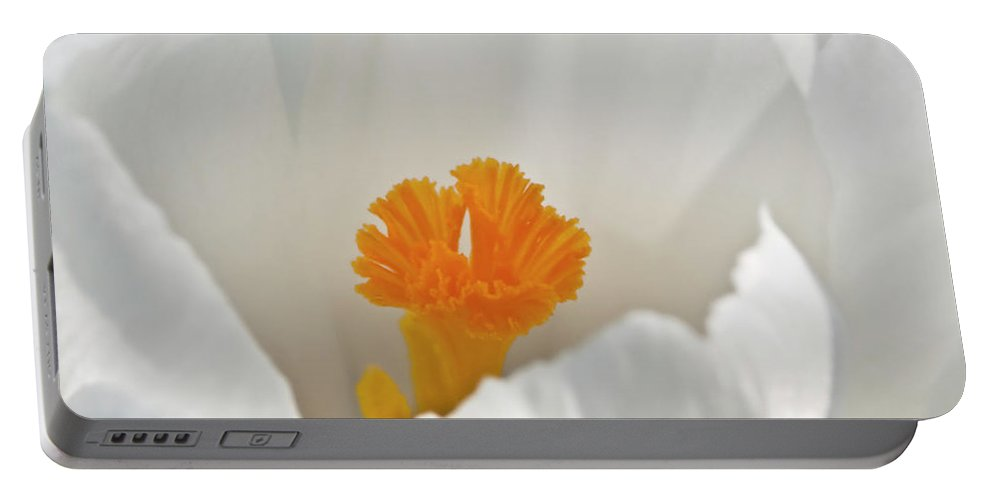 Crocus Flower Portable Battery Charger featuring the photograph White Crocus by Brian Roscorla
