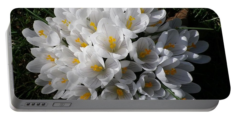 Croci Portable Battery Charger featuring the photograph White Crocuses by Richard Brookes