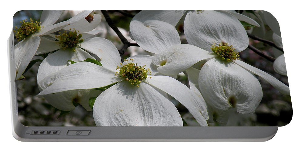 Tranquility Portable Battery Charger featuring the photograph White Dogwood by Janis Kirstein