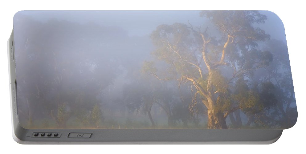 Tree Portable Battery Charger featuring the photograph White Gum Morning by Mike Dawson