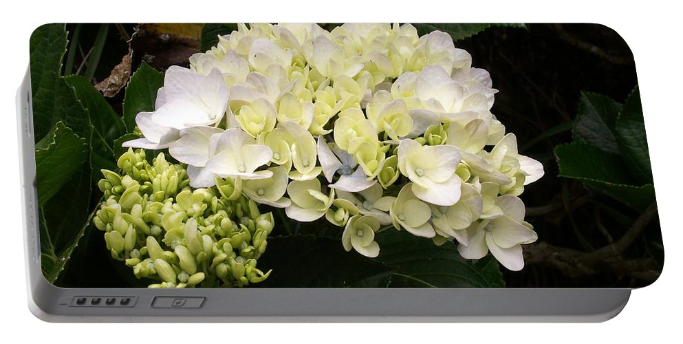 Flower Portable Battery Charger featuring the photograph White Hydrangeas by Amy Fose