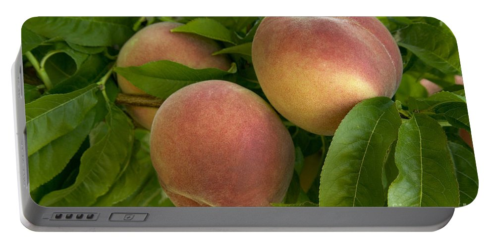 Peaches Portable Battery Charger featuring the photograph White Lady Peaches On A Branch by Inga Spence