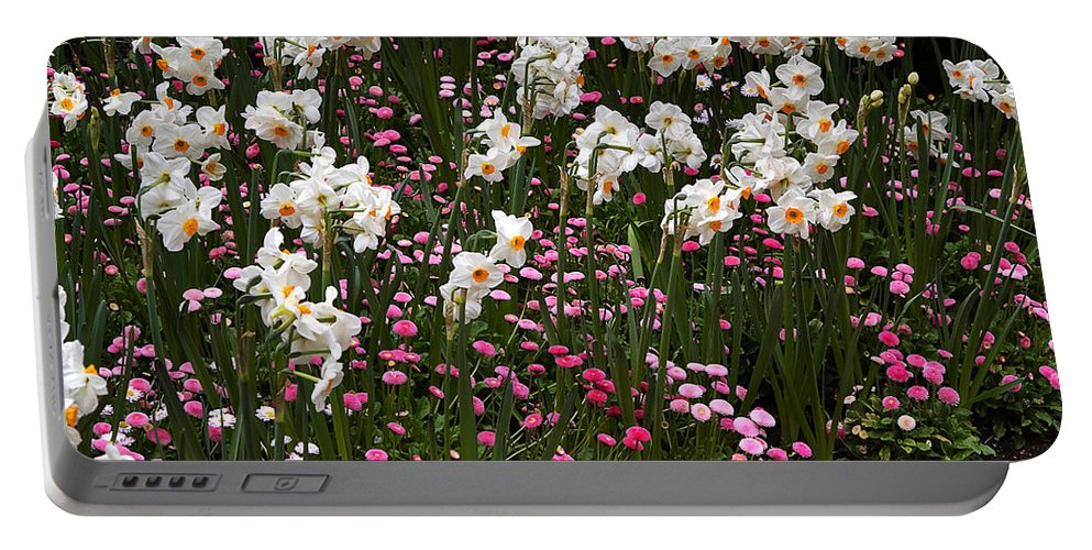 Flower Portable Battery Charger featuring the photograph White Narcissus With Pink English Daisies In A Spring Garden by Louise Heusinkveld