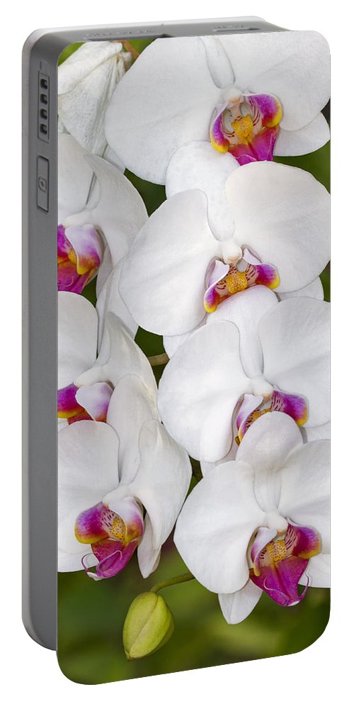 Flower Portable Battery Charger featuring the photograph White Orchids by Bob Slitzan